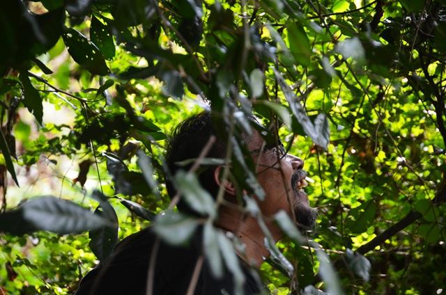 Mengintip obyek dibalik rimbun dedaunan