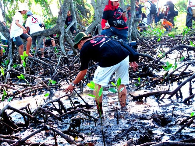 Menanam bakau di Pulau Rambut