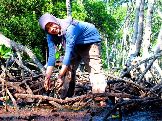 Menanam pohon bakau di Pulau Rambut