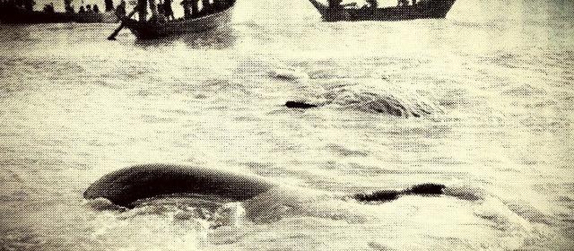 Paus yang terdampar di karawang 1