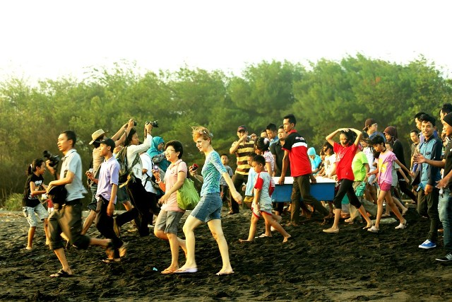 Perjuangan membawa Tukik ke pantai