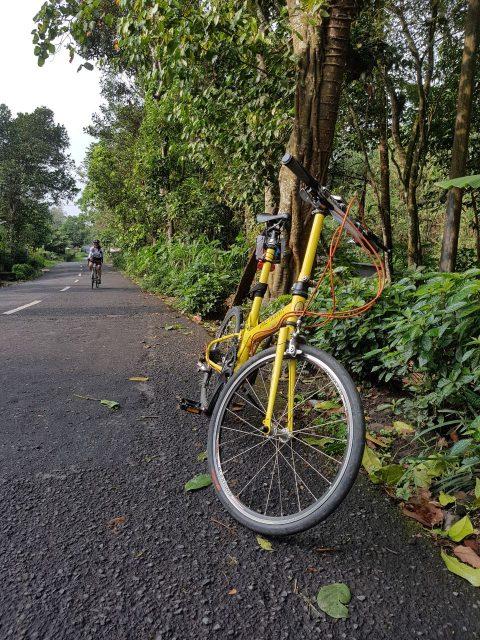 Seli menuju Goa Jepang